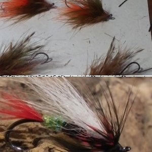 Chris K. Flies and Images from Afield
