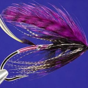 Purple feather wing