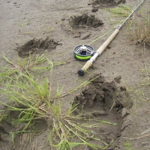 G Bear tracks on the Kanektok