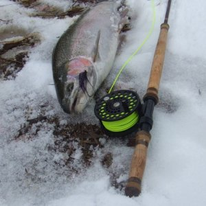 steelhead_on_intruder_Nov_08_2_comprssed