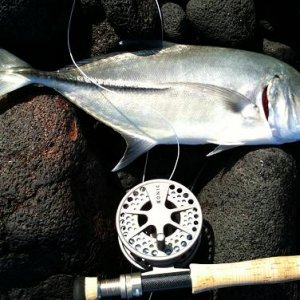 Big Eye Papio (Trevally)