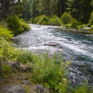 Metolius River in July