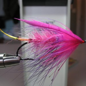 Magenta and Marabou Dee