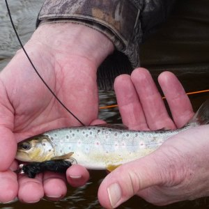 World_s_Smallest_Brown_Trout_Argentina